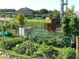 South Hill Allotment